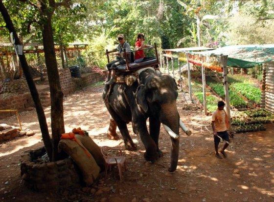 V.Grudžio nuotr./Jodinėjimas drambliais – dažna pramoga Indijoje