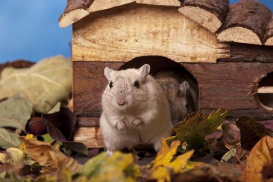 Shutterstock nuotr./Smiltpelė