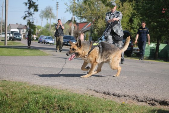 Tomo Markelevičiaus nuotr./Policijos šunų mokymai