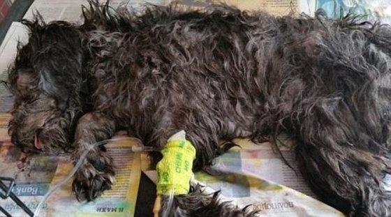 Šiukšlių spaustuve mirtinai sužalotas šuo Billy