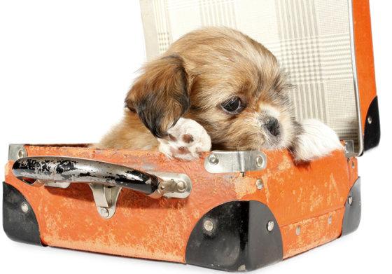 Shutterstock nuotr./Šuniukas