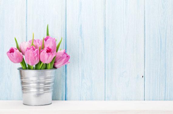 123RF.com nuotr./Tulpės
