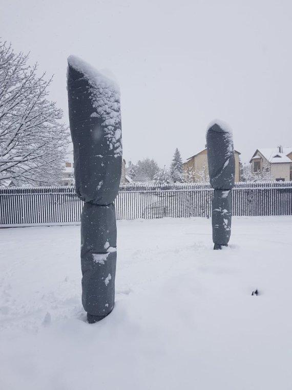 """Asmeninio archyvo nuotr./""""Aprengtos"""" palmės žiemą"""
