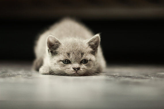 Shutterstock nuotr./Katė išdaigininkė