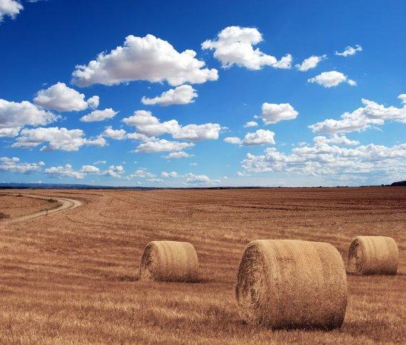 """Pixebay"" nuotr./Žemės ūkis"