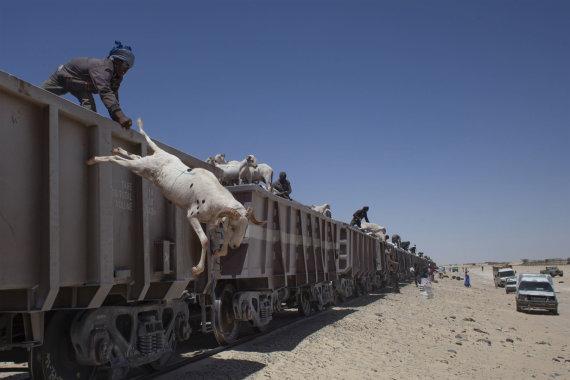 Mykolo Juodelės nuotr./Kelionė Mauritanijoje