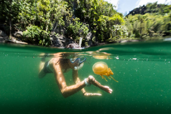 Shutterstock.com nuotr./Medūzų ežeras, Palau