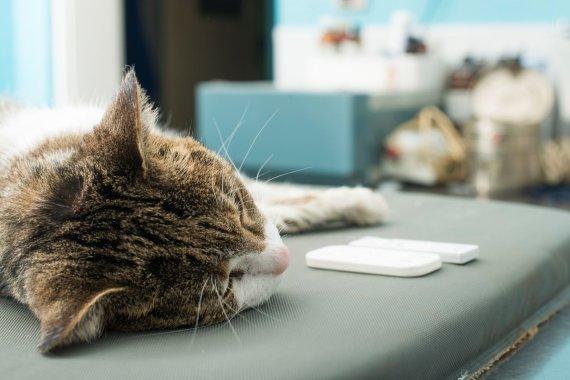 Vida Press nuotr./Katė veterinarijos klinikoje