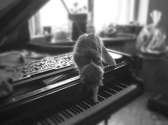 123RF.com nuotr./Katinas ir pianinas