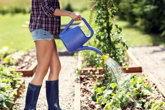 123RF.com nuotr./Mergina laisto daržą
