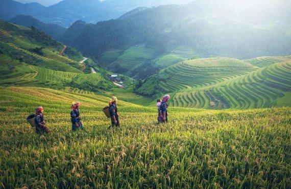 """""""Shutterstock"""" nuotr./Vietinės moterys ryžių terasose, Vietnamas"""