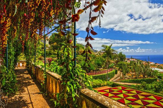 Shutterstock.com nuotr./Madeiros botanikos sodas