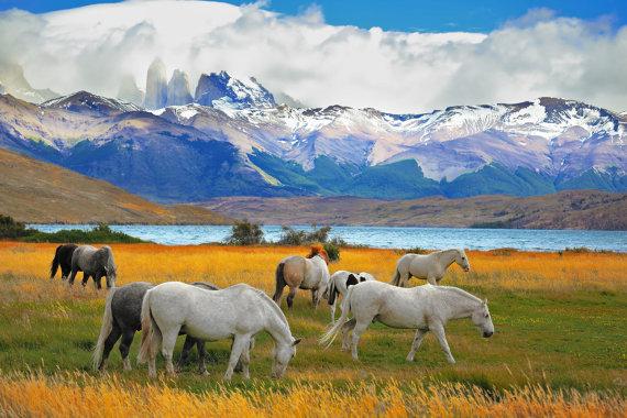 Shutterstock nuotr./Torres del Paine
