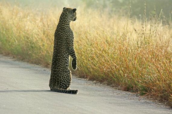 """Scanpix""/""Caters News Agency"" nuotr./Gyvūnai Krugerio parke"