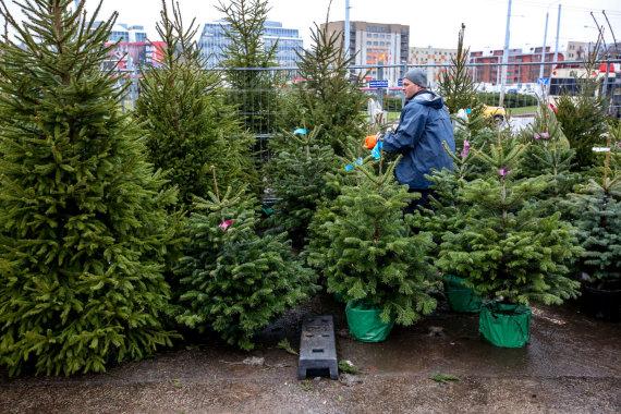 Vidmanto Balkūno / 15min nuotr./Prekyba kalėdinėmis eglutėmis šalia prekybos centro Žirmūnuose
