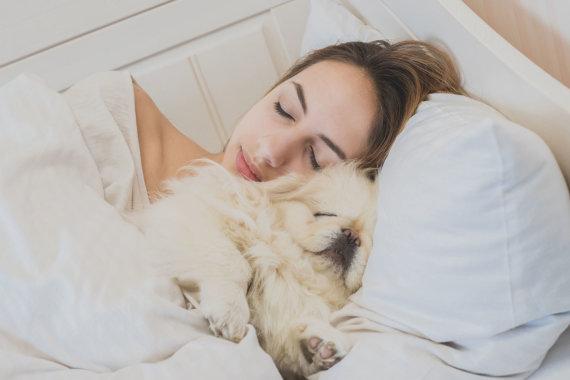 123RF.com nuotr./Šuo miega lovoje