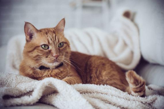 123RF.com nuotr./Katinas