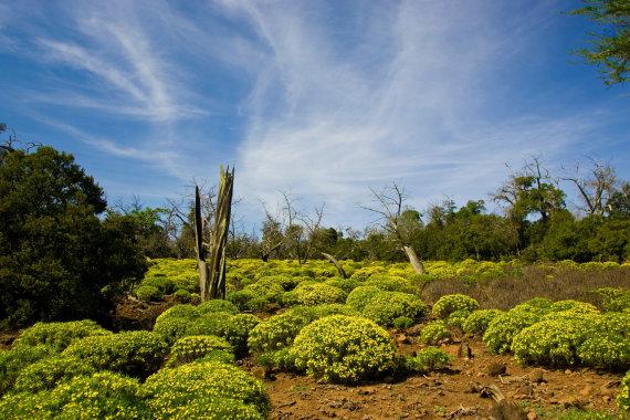 """""""Shutterstock"""" nuotr./Dajaus nacionalinis parkas, Džibutis, Afrika"""