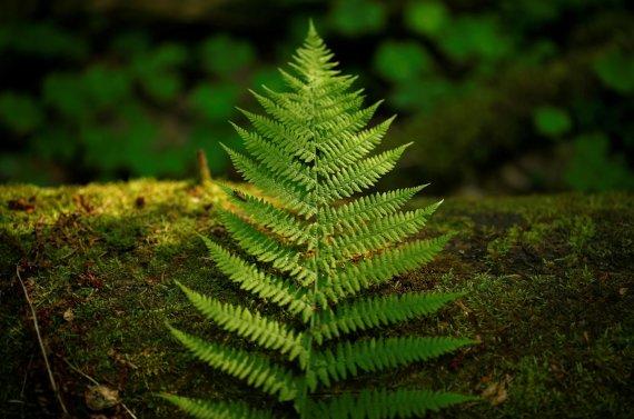 """""""Reuters""""/""""Scanpix"""" nuotr./Belovežo giria – vienintelė pirmykštė giria išlikusi Europoje, jai daugiau nei 6000 metų"""