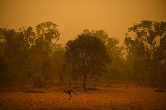 """Reuters""/""Scanpix"" nuotr./Gaisras Australijoje"