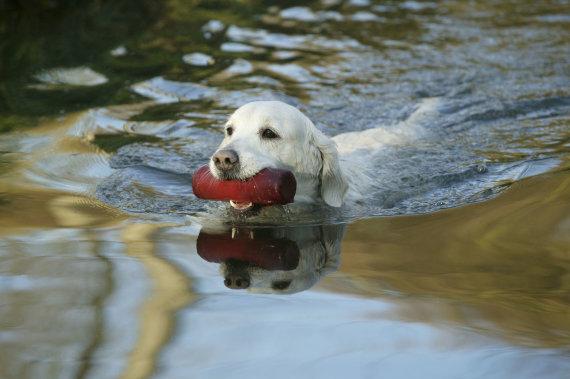 Vida Press nuotr./Šuo plaukia