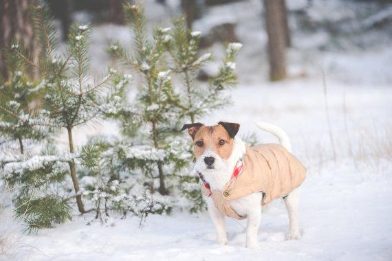 Fotolia nuotr./Šuo žiemą