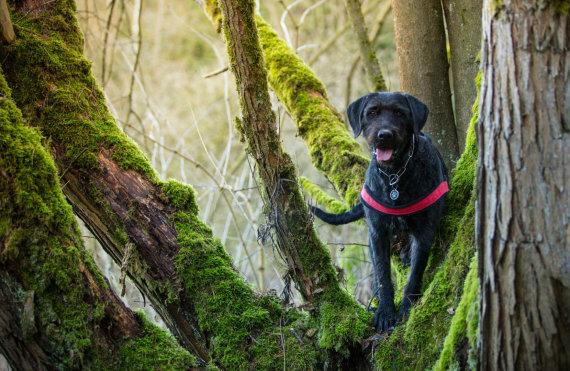 123RF.com nuotr./Šuo miške