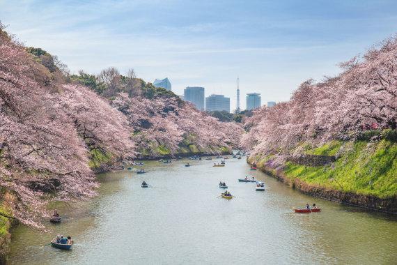 123rf.com nuotr./Tokijas, Japonija