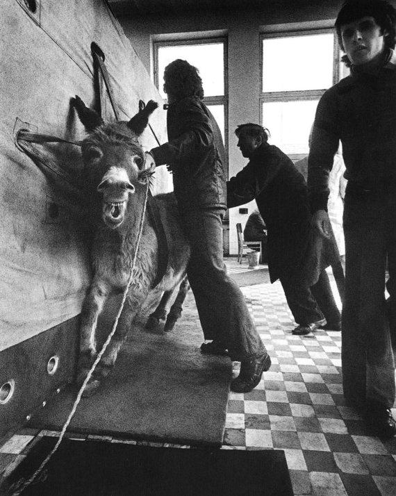Veterinarijos klinikose. Kaunas, 1978. Aleksandro Macijausko nuotr.
