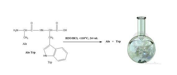 VU žurnalo SPECTRUM iliustr./dipeptido hidrolizė