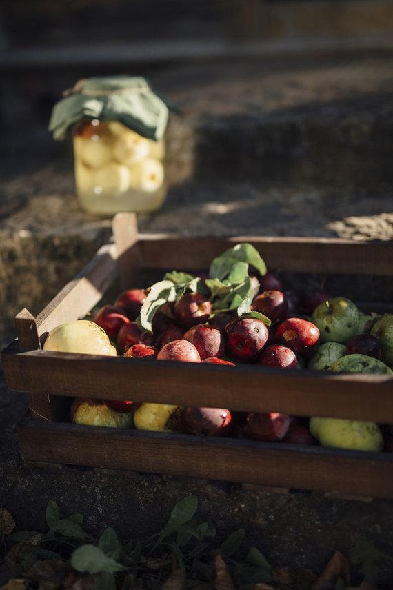 Šarūnė Zurba nuotr. /Rauginti obuoliai