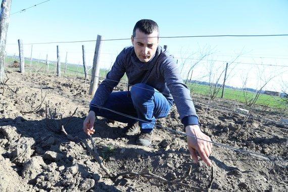 Arūno Starkaus nuotr. /Ernestas Aušvicas savo vynuogyne