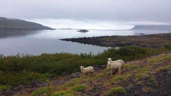 Juozapas.lt nuotr./Vienintelės tikros kelionės draugės – avys.