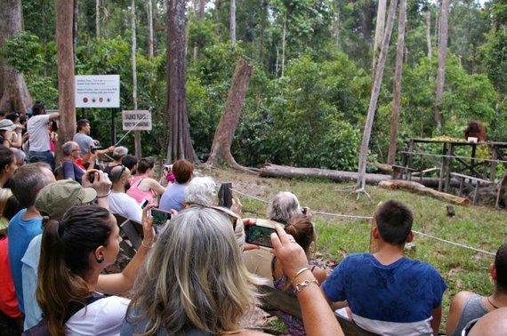 """Viktorijos Panovaitės nuotr./Orangutangų stebėjimo vieta """"Camp leaky"""" stovykloje"""