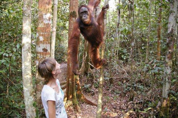 Viktorijos Panovaitės nuotr./Beprotiškai įdomu, bet kartu ir baisu stebėti orangutangą iš arti.