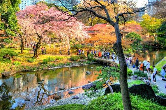 Kelioniuakademija.lt nuotr./Koishikawa Korakuen botanikos sodas