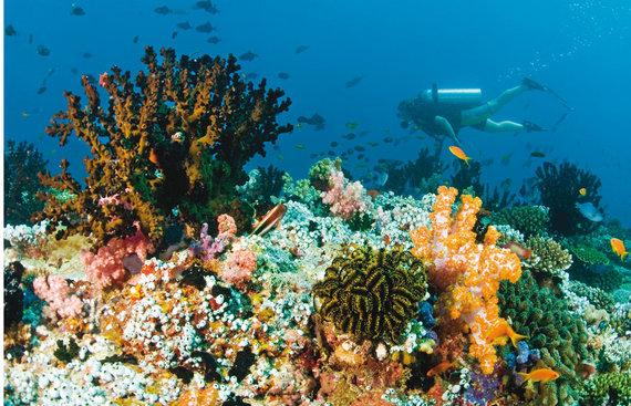 """""""Travel Planet"""" nuotr./Maldyvai – rojus nardytojams"""