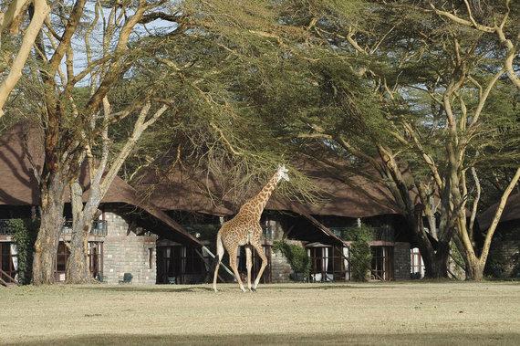 "Shutterstock.com/""Giraffe Manor"""