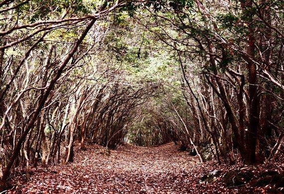 Shutterstock.com/Aokigaharos miško tunelis