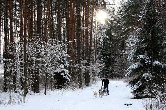 K.Žukausko nuotr./Kernavėje žiemą privaloma pasivažinėti šunų kinkiniais