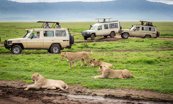 Shutterstock nuotr./Afrika