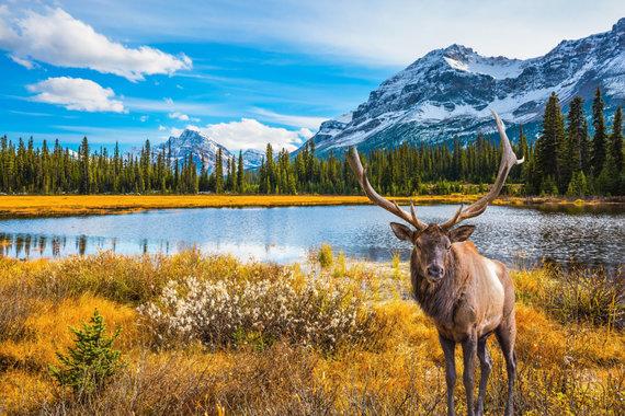 Shutterstock nuotr./Kanada