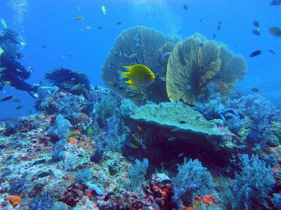 """Shutterstock nuotr./""""Richelieu Rock"""""""