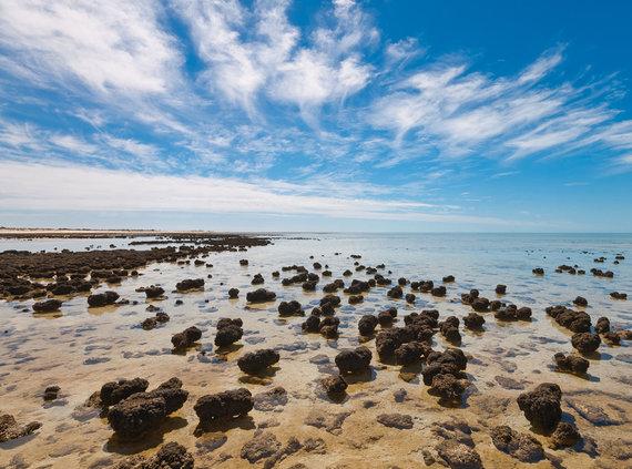 Shutterstock nuotr./Ryklių įlanka