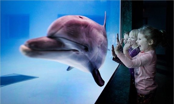 Neringos ir Vidmanto Girvainių nuotr./Vaikai ir delfinai (asociatyvinė nuotr.)