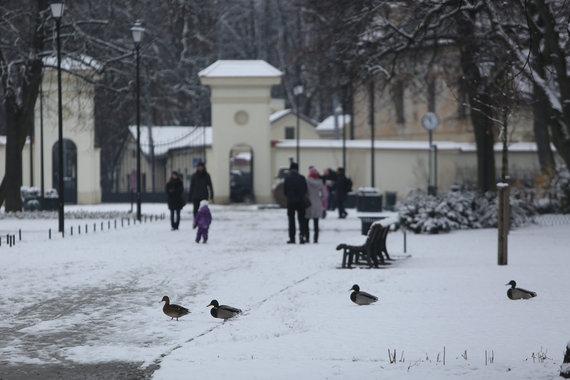 Juliaus Kalinsko/15min.lt nuotr./Pirmasis sniegas Vilniuje