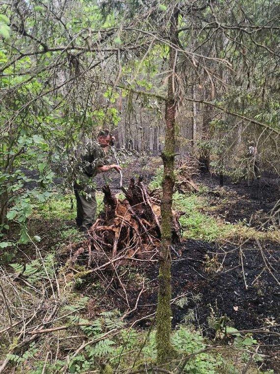 VMU nuotr./Prienuose liepsnojo miškas