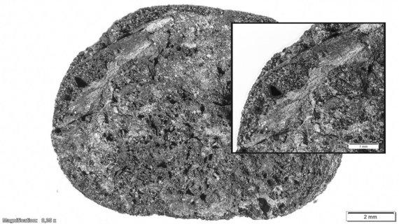 Auksės Rusteikytės nuotr./Archeologinė duona iš Apuolės piliakalnio. Nuotraukoje matyti suanglėjusioje duonoje esantis grūdas.