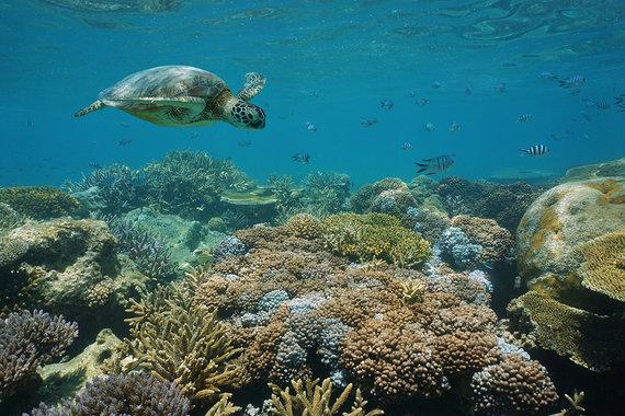 Shutterstock.com nuotr./Naujosios Kaledonijos barjerinis rifas