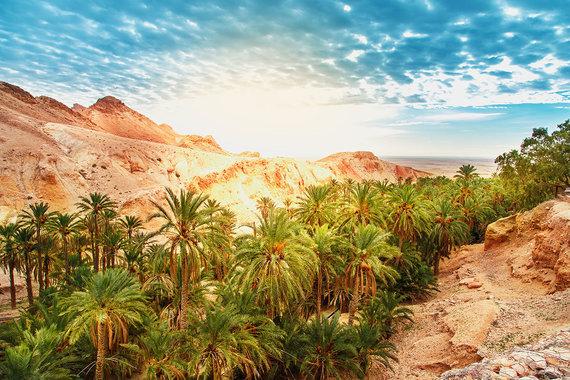 Shutterstock.com nuotr./Chebika oazė, Tunisas